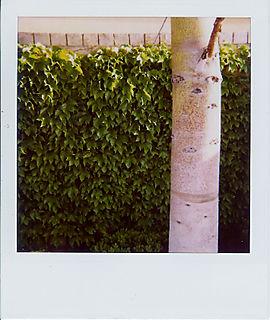 Best tree pic