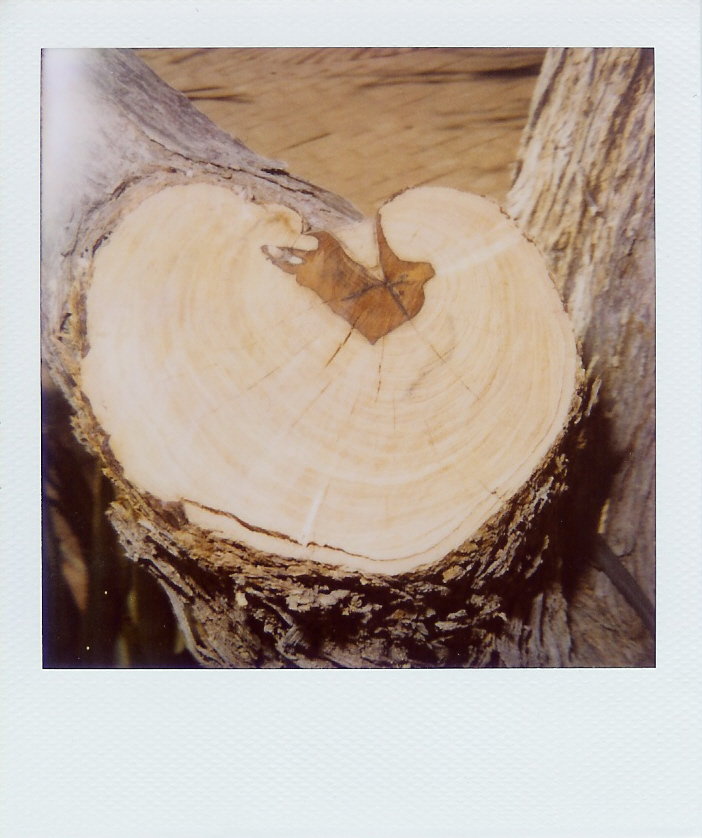 Treetrunk heart