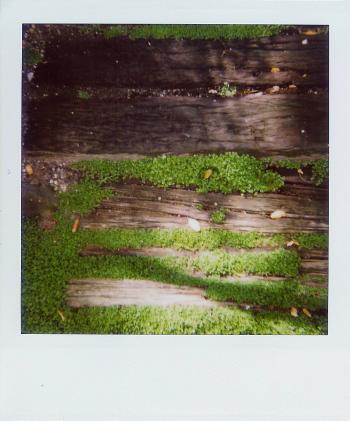 Moss_polaroid_2